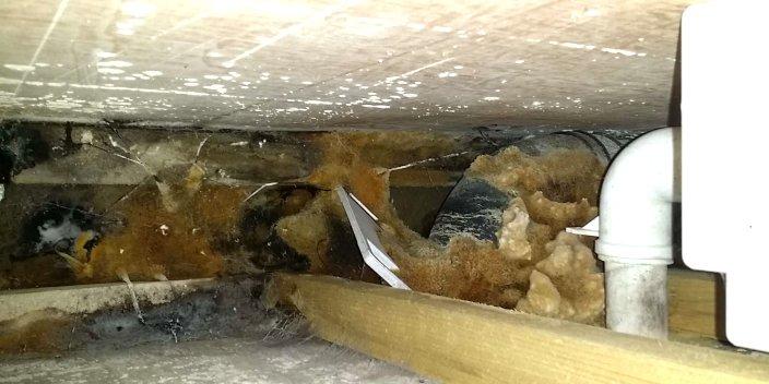 Schimmelpilz und holzzerstörende Pilze in der Installatioonszone hinter einem WC